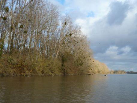 Le bouchon vaseux illustré par le GIP Loire Estuaire, à la webTV de Saint-Sébastien-sur-Loire