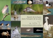 Illustré de la faune dans l'estuaire de la Loire