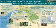 La diversité des habitats et des espèces dans les zones humides de l'estuaire de la Loire