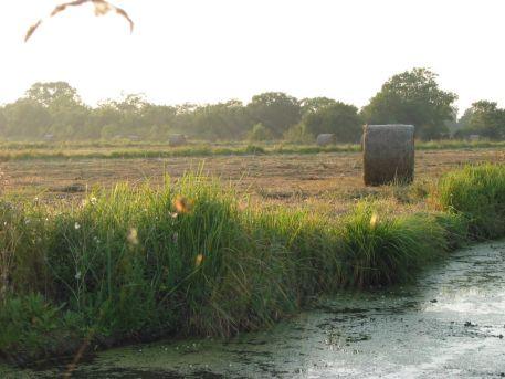 Fauche dans le marais Fresnier