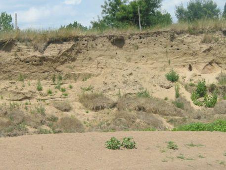 Berge sableuse dans laquelle niche l'Hirondelle de rivage