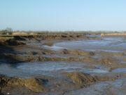 Vasière découverte à marée basse dans l'estuaire de la Loire