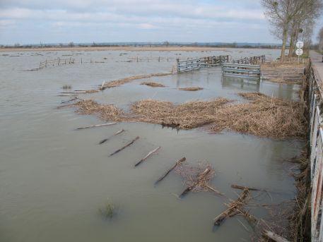 Marais sous l'eau après le passage de la tempête Xynthia du 28 février 2010, Chemin des Carris