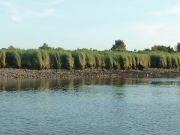 """Le GIP Loire Estuaire à Saint-Jean-de-Boiseau lors de la """"Journée de la Biodiversité"""""""